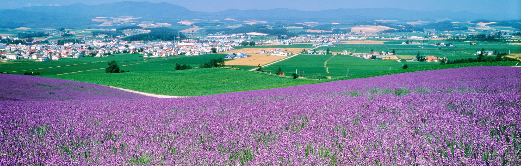 Furano on Shapes And Colors